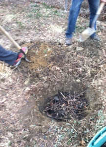Put Mixture of Compost and Manure into the Hole